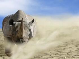 凭栏:房地产——中国经济最大的灰犀牛